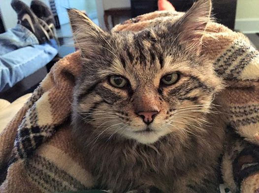 Student Starts GoFundMe Account for Rescue Cat