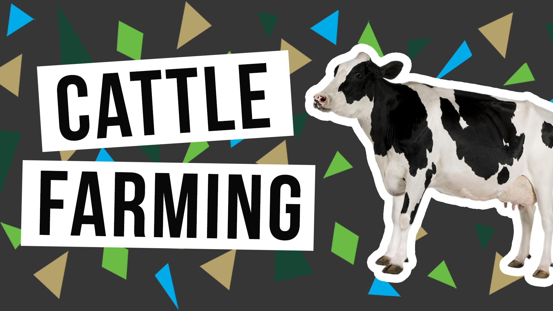 WILL HATCHETT TALKS CATTLE FARMING & PILOTING - PC TALK
